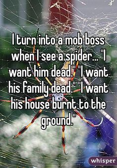 "I turn into a mob boss when I see a spider... ""I want him dead."" ""I want his family dead."" ""I want his house burnt to the ground."""