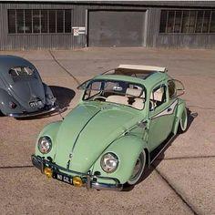 beetle show case