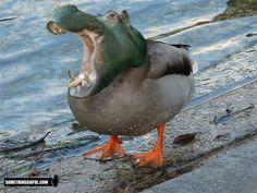 (2011-06) Duck + hippo = duppo?
