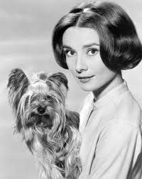 audrey hepburn dogs - Google Search