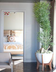 pencil cactus   residential interior  photo: Julia Robinson