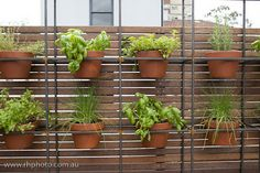 Here is your herb garden Dee! melbourne cafes photo blog