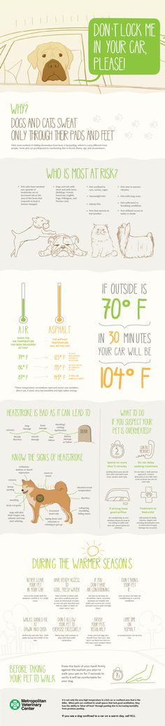 Caring for Pets in Warm Weather Infographic