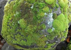 Moss covered rock (by Melody Pena!)