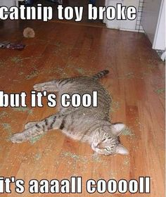 I came home one day to find my cat had eaten the lid to the cat nip and it was ALL over the floor like that.