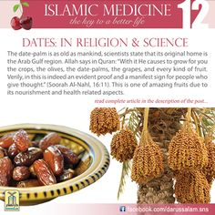 Islamic Medicine - The Key to a Better Life Natural Medicine, Herbal Medicine, Islam And Science, Healthy Life, Healthy Eating, Healthy Meals, Miracles Of Islam, Halal Recipes, Nutrition