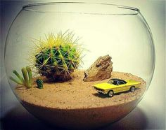 One way is to display the terrarium. The terrarium is a small garden in a glass container. Cactus Terrarium, Cactus Planters, Mini Cactus Garden, Cactus Garden Ideas, Cactus Craft, Cactus Cactus, Desert Cactus, Green Garden, Hanging Planters