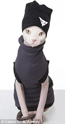 Ready for the catwalk! Would you dress your cat up in clothes? You can now buy them from Melanie Manson, makeup artist and possible crazy person.