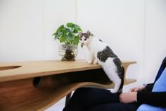 This table designed for humans and for cats, has been designed by Ruan Hao, and has been presented at the Milan Design Week 2014. http://www.ruanhao.com/ #cat #design #home