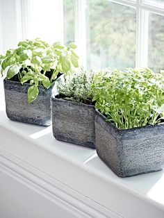 Carefully hand crafted from terracotta clay with a rustic textured finish, our set of three matching cube planters are perfect for small house plants, succulents or cacti. These small weighty grey planters each feature a unique textured effect with a whitewash finish and four sponge pads on the base to prevent marking. Ideal for indoor planting, why not display in your kitchen filled with herbs?