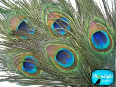 Peacock Feathers , Peacock Eye , Tail Feathers , Buy Feathers