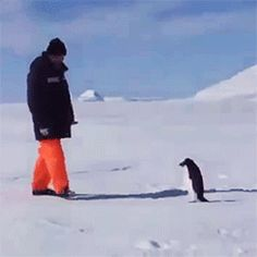 Leonardo DiCaprio gets attacked by a penguin