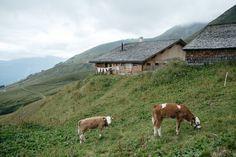 Landscape, Animals, Scenery, Animales, Animaux, Animal, Animais, Corner Landscaping
