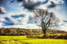 Spring Fields - HDR photography