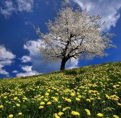 #Beautiful tree on Hill