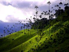 Ver Colombia y maravillarse de Valle de Cocora Latin America, South America, Vineyard, Spaces, Wall, Nature, Travel, Outdoor, Landscape Photos