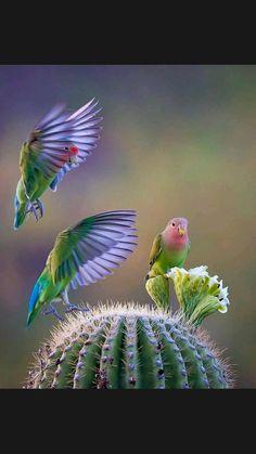 All Birds, Little Birds, Love Birds, Pretty Birds, Beautiful Birds, Animals Beautiful, Photo Animaliere, Photo D Art, Exotic Birds