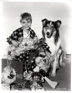 A vintage Christmas press shot featuring Jon Provost and LASSIE, circa Vintage Christmas Photos, Retro Christmas, Vintage Holiday, Holiday Photos, Christmas Pictures, White Christmas, Christmas Tv Shows, Christmas And New Year, Christmas Holidays