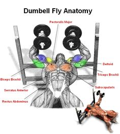 A great isometric exercise for your chest is the dumbell fly. This is a great exercise that focuses on the sternal head of the pectoralis major. Remember when doing the dumbell fly to always keep a slight bend in your elbows as if you hugging a barrel. Start with a light weight when doing these if you haven't ever done them before. Also bend more in the elbows as you go down with the weight.