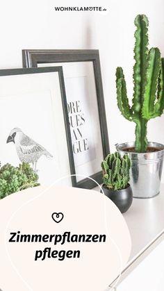 Du möchtest Deine Zimmerpflanzen pflegen, weißt aber nicht genau, wie Du ihnen etwas Gutes tun kannst? Im Beitrag liest Du, wie Du Deine Zimmerpflanzen pflegst und was es mit dem Urban-Jungle-Trend auf sich hat. Small Trees, Planting, Indoor House Plants, Succulents, Homes