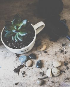http://kimklassen.com  succulents in a mug.....   garden, green, earth, table top, plant
