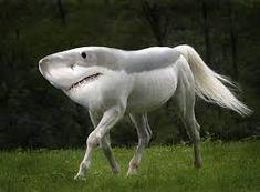 Image result for ugly animal pugs cross shark