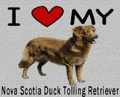I Love My Nova Scotia Duck Tolling Retriever Cutting Board - Great For Kitchens by MyHeritageWear. $34.95