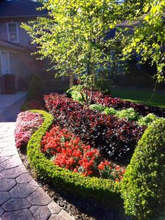 Florida Plants Landscaping, Small Front Yard Landscaping, Driveway Landscaping, Lawn And Garden, Garden Beds, Garden Art, Garden Design, Plant Design, Beautiful Landscapes