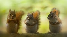My buddies and me by Andre Villeneuve - Photo 125230293 - 500px