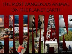 The most on the planet earth . Dangerous Animals, Passion For Life, Planet Earth, Natural World, Planets, Learning, Nature, Naturaleza, Studying