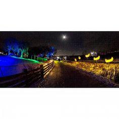 #Zoominescence Edmonton Valley #Zoo #Yeg #urbanyeg #ig_myshot #ig_captures #igyegers #IGyeg #exploreedmonton #explorecanada #nature #landscape #colourpop #weareyeg #viewbugfeature #myphotocrowd #peerlesspixel #edmontonliving #travelalberta #lifeincanada #unlimitedcanada #ig_color
