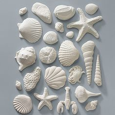 21 Gum Paste Sea Shells for Weddings and Cake Decorating - Ships Insured Diy Clay, Clay Crafts, Arte Coral, Biscuit, Soap Carving, Fondant Figures, Seashell Crafts, Air Dry Clay, Clay Projects