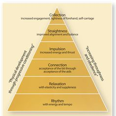 This training scale, depicted as a pyramid, shows the ideal development of a dressage horse, starting with just going forward and culminating with the highest level of collection.
