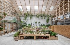 Gallery of Tropical Forest / Tayone Design Studio - 1