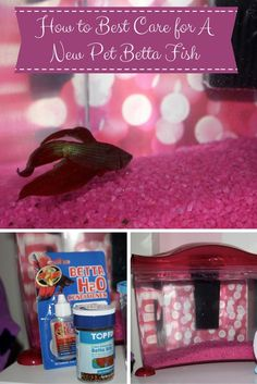 How to make a easy diy aquarium filter for betta fish for Easy to care for fish