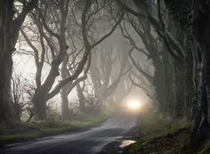 The Dark Hedges - Black & White Gary McParland- Fine Art Landscape Photography Landscape Edging Stone, Nature Landscape, Urban Landscape, Abstract Landscape, Landscape Paintings, Acrylic Paintings, Dark Landscape, Mountain Landscape, Landscape Fountains