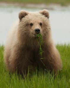 Resultado de imagem para cute bear