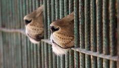 Gros manque de signatures  Animaux - Signez la pétition : Le zoo du Mont Faron : le zoo de la prison !