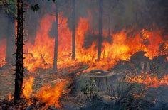 Συναγερμός: Εκκενώνονται χωριά από ισχυρή πυρκαγιά!
