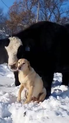 20 Ideas Funny Animals Friends Awesome For 2019 Cute Funny Animals, Cute Baby Animals, Funny Cute, Funny Dogs, Animals And Pets, Super Funny, Funny Memes, Farm Animals, Big Animals