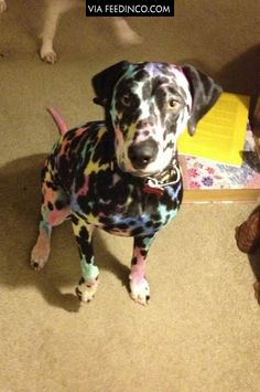 Kids, sharpies, and a Dalmatian makes for interesting times