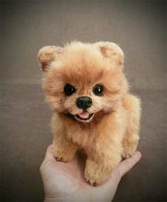 Pomeranian Puppy Dog Pom Pom