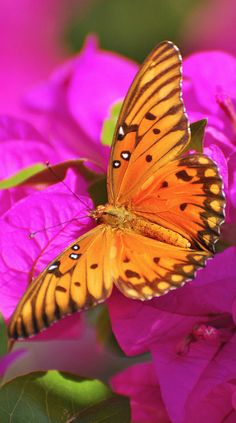 colorful butterfly....