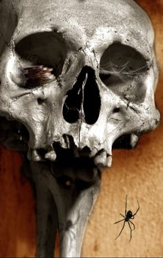Skully -All rights reserved byMarko Popadic