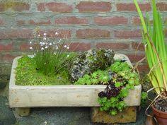 Alpine Garden Plants and Sink Gardens Rock Garden Plants, Moss Garden, Garden Planters, Succulents Garden, Rockery Garden, Garden Stones, Plant Troughs, Trough Planters, Alpine Garden