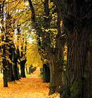 Autumn in Czechia Beautiful Places In The World, Most Beautiful, My Heritage, Czech Republic, Nature Photos, Landscape, Country, Praha, Plants
