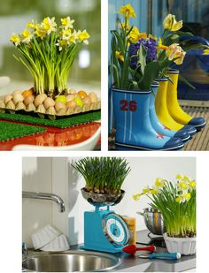 flower bulb gardening decorating ideas more