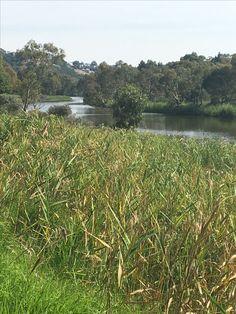 Barwon River, Geelong, VIC, Australia