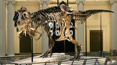 A tyrannosaurus rex skeleton perfectly preserved. A great use of holography for this would be to have a replica hologram shrunke down that people can interact with. (Field Museum, Chicago 2015)