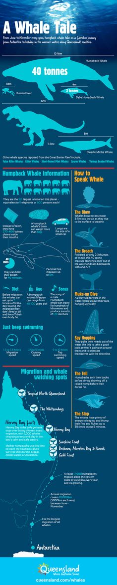 With whale watching season coming up in Queensland it's time to brush up on your whale vocabulary! #thisisqueensland
